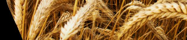 Agrostroj